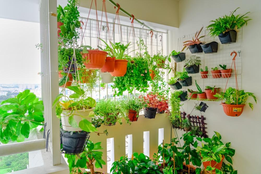 Realizzare l'orto in casa? Sì, in verticale!